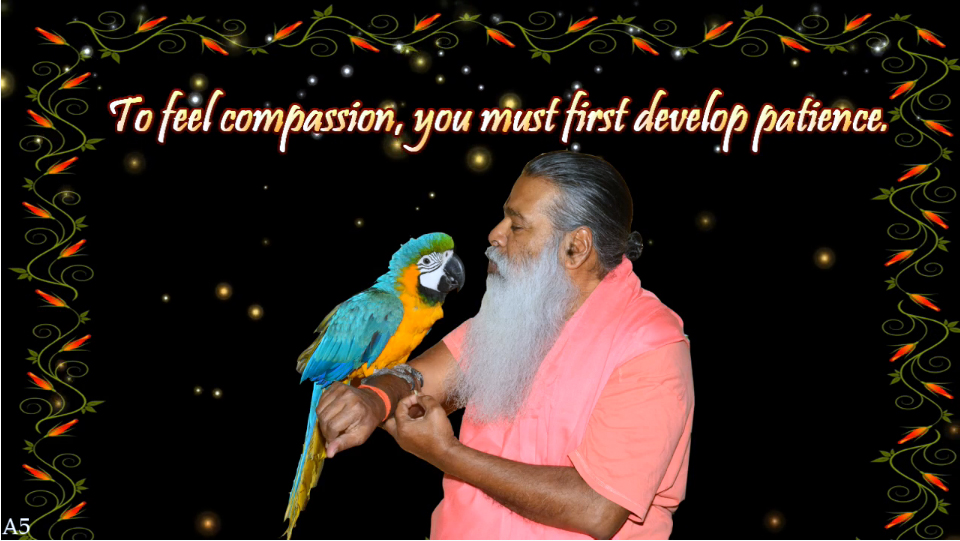 Compassion (English) ~ July 1, 2013