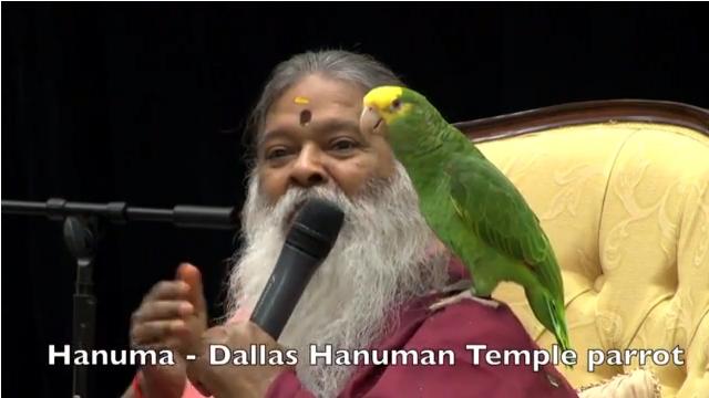 Dallas Hanuma Parrot