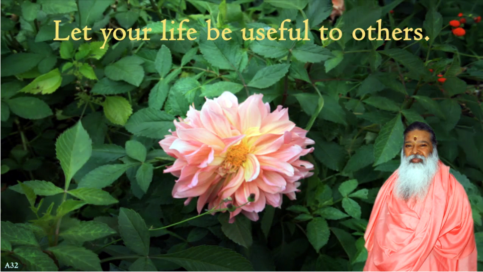 Let your life be useful