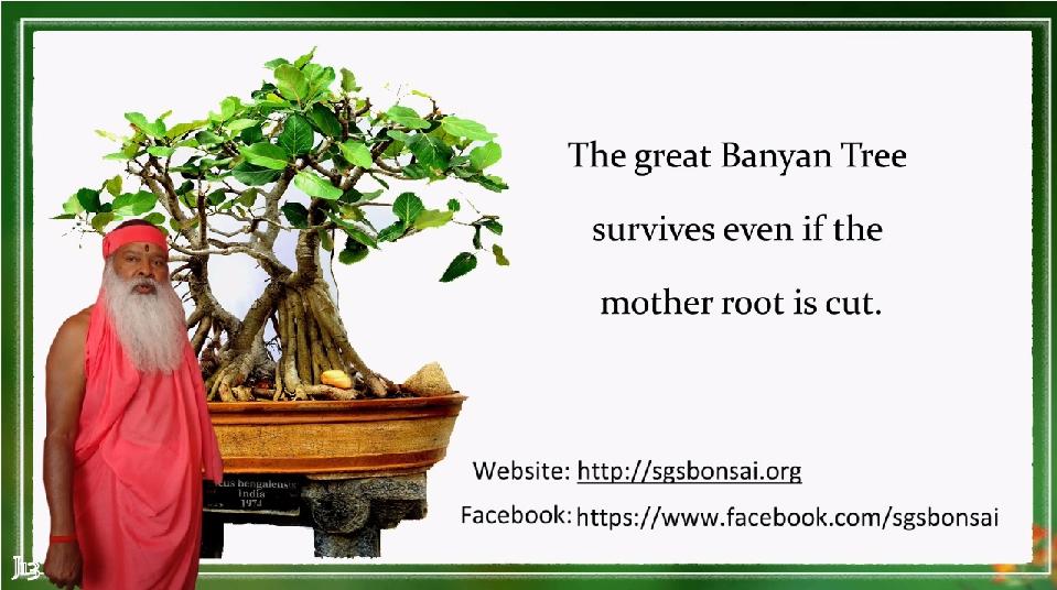BanyanTree