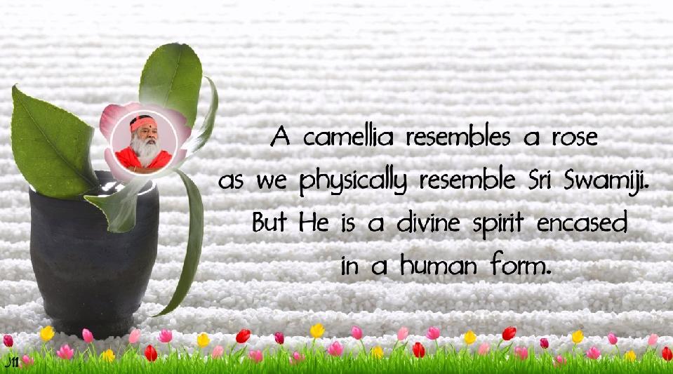 CamelliaRose