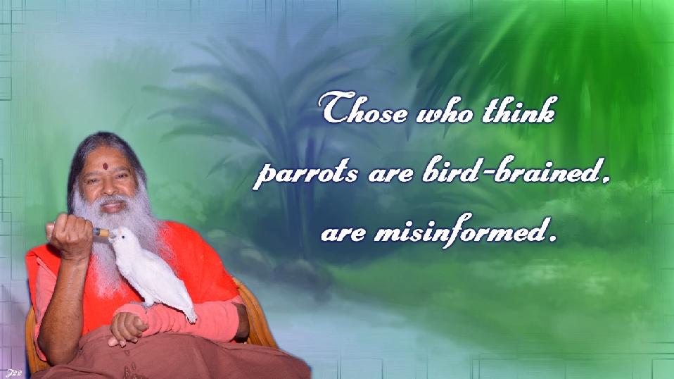 birdbrained