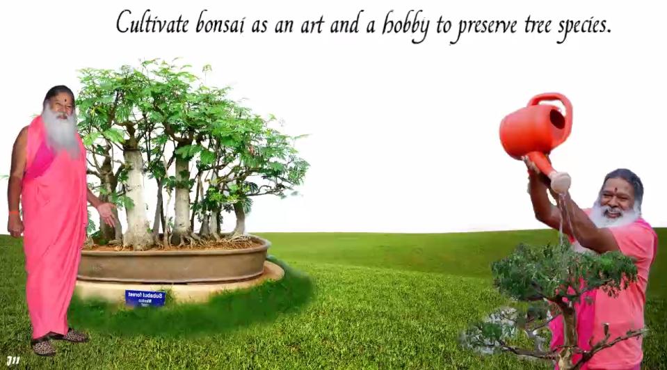 BonsaiArt